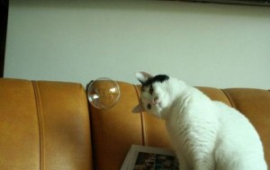 Bubble cat